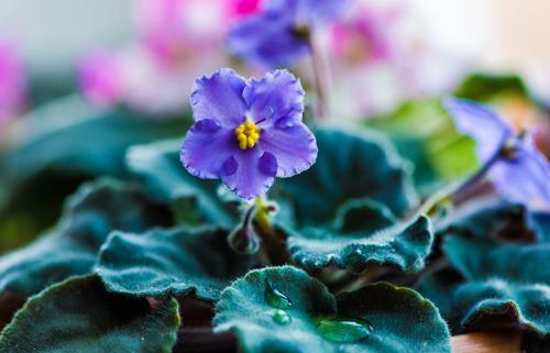 דבר אלי בפרחים, אבל בזול – אופציות חסכוניות ואחרות לזר הרגיל